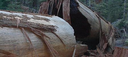 fallen_giant_450x200_414864_8733.jpg
